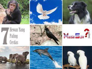 7 Hewan Yang Paling Pintar Di Dunia