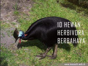 Hewan Herbivora Berbahaya Di Dunia