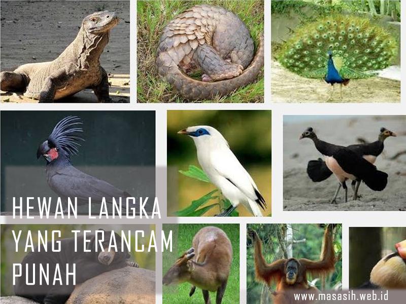 Hewan Langka Terancam Punah Di Dunia