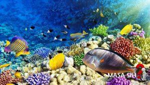 Surga di Lautan Indonesia