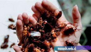 keunikan hewan kecoa