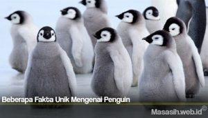 Beberapa Fakta Unik Mengenai Penguin