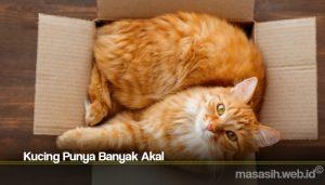 Kucing Punya Banyak Akal